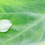 3月22日は「世界水の日(World Water Day)」